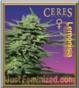 Ceres Lemonesia Cannabis Seeds Marijuana Strain - Cheap Just Fem UK